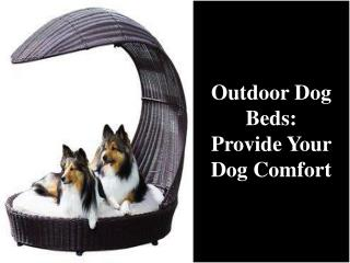 Outdoor Dog Beds: Provide Your Dog Comfort