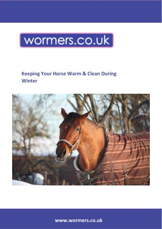 Keeping Your Horse Warm & Clean During Winter