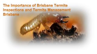 The Importance of Brisbane Termite Inspections and Termite Management Brisbane