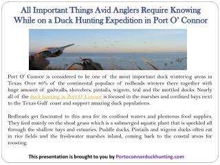 All Important Things Avid Anglers Require Knowing While on a Duck Hunting Expedition in Port O' Connor