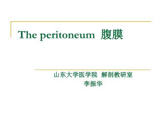 The peritoneum   腹膜