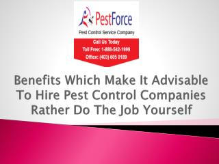 Benefits Which Make It Advisable To Hire Pest Control Companies Rather Do The Job Yourself