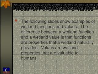 Wetland: Functions and Values