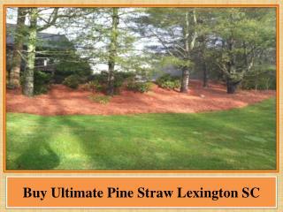 Buy Ultimate Pine Straw Lexington SC