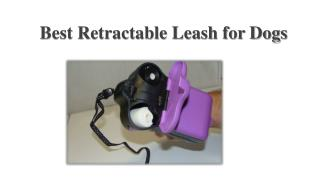 Best Retractable Leash for Dogs