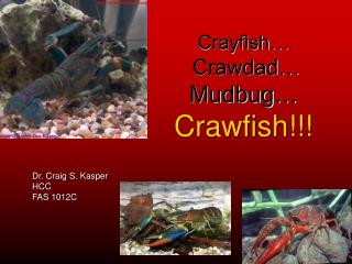 Crayfish… Crawdad… Mudbug… Crawfish!!!