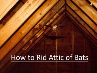 How To Rid Attic of Bats