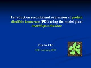 Introduction recombinant expression of  protein disulfide isomerase  (PDI) using the model plant  Arabidopsis thaliana