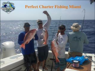 Perfect Charter Fishing Miami