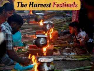 The harvest festivals