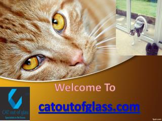 Cat flap fitters,Cat flap installation ,Cat flap in glass,Cat flap