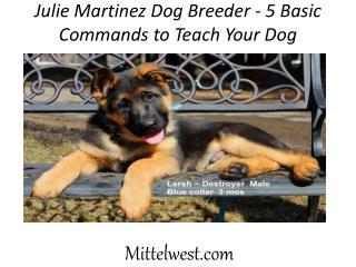 Julie Martinez Dog Breeder - 5 Basic Commands to Teach Your Dog
