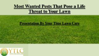 Most Wanted Pests That Pose a Life Threat to Your Lawn