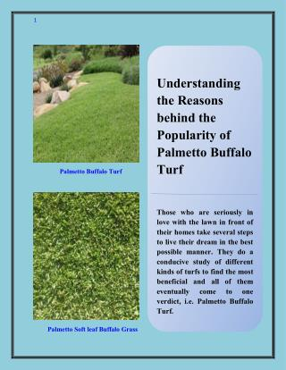 Understanding the Reasons behind the Popularity of Palmetto Buffalo Turf