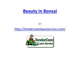 Beauty in Bonsai