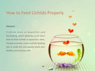 How to Feed Cichlids Properly