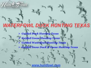 Duck Hunting Texas - Huntfowl