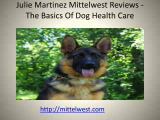 Julie Martinez Mittelwest Reviews - The Basics Of Dog Health Care
