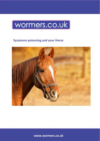 Sycamore poisoning and your Horse