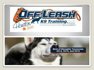 Memphis Tennessee Dog Trainers | Memphis Off Leash K9 Dog Training | Dog Obedience Training Memphis TN | Expert Dog Trai