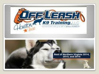 Northern Virginia Dog Trainers | Off Leash K9 Dog Training | Dog Obedience Training | Expert Dog Trainer | Pro Dog Train