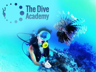 Padi Divemaster Course Thailand and Scuba Diving Center Koh Samui