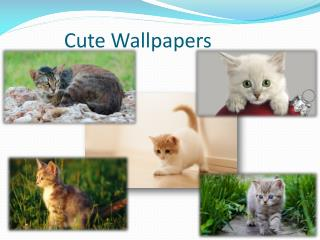 Cute Pets Wallpapers