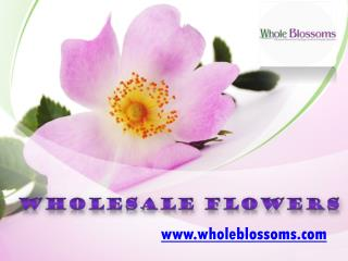 Wholesale Flowers - www.wholeblossoms.com