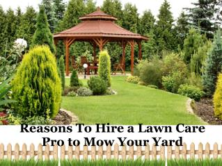 Reasons To Hire a Lawn Care Pro to Mow Your Yard