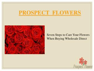 Seven Steps to Care Your Flowers When Buying Wholesale Direct