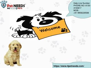 Buy Dry Dog Food Online India | 4Petneeds