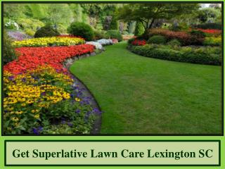 Get Superlative Lawn Care Lexington SC