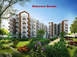 Mahaveer Brooks