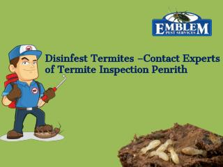 Termite Inspection Penrith|Termite Inspection Blue Mountains