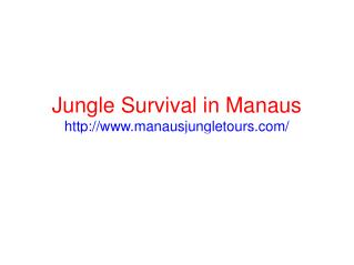 Amazing jungle tours in Manaus