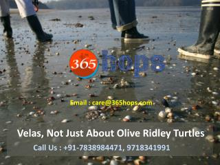 Velas, Not Just About Olive Ridley Turtles