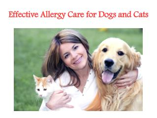 Allergy Treatment For Cats and Dogs From TruCare Pharmacy