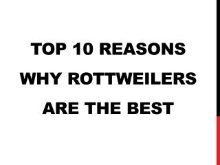 Top 10 Reasons Why Rottweilers Are The Best