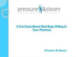 5 Fun Facts About Bed Bugs Hiding In Your Mattress