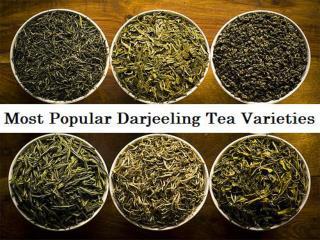 Most Popular Darjeeling Tea Varieties