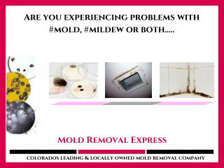 Accurate and expedited Mold testing service