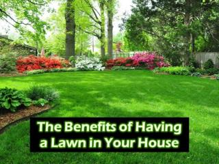 The Benefits of Having a Lawn in Your House
