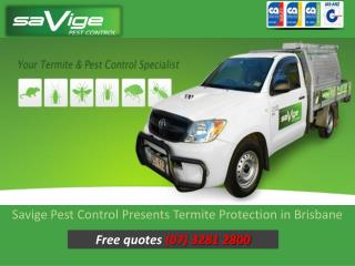 Savige Pest Control Presents Termite Protection in Brisbane