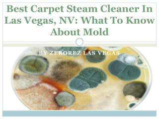 Best Carpet Steam Cleaner In Las Vegas, NV: What To Know About Mold