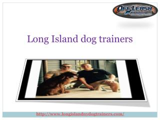 Providing Dog Training Services in Long Island New York USA