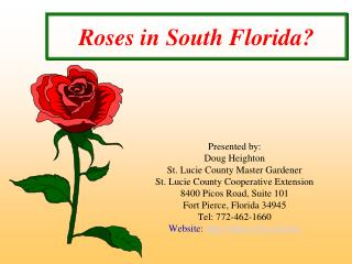 Roses in South Florida