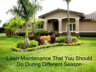 Lawn Maintenance That You Should Do During Different Season
