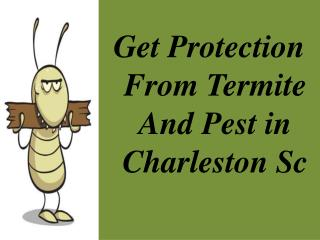 Make Your Home Free From Termite & pest  in Charleston SC