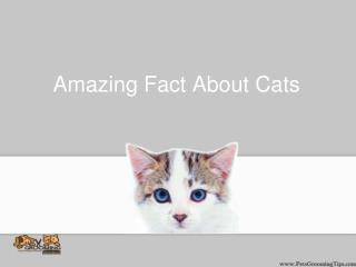 Amazing Fact About Cats