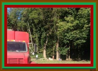 Tree Trimming Millersville